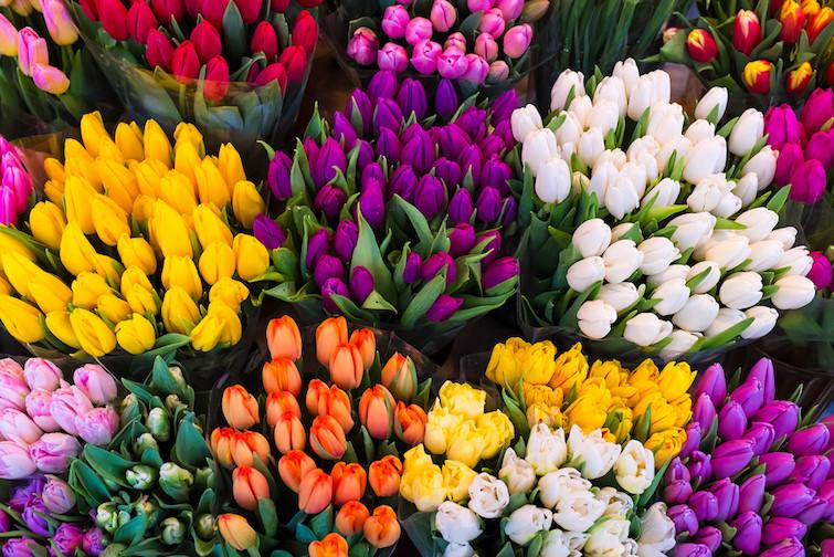 4月の花🌸【派遣・求人・お仕事案内・スタッフラインズ 宮崎・都城】
